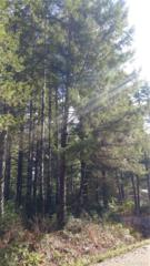 11 NE Lake Ct, Tahuya, WA 98588 (#1091998) :: Ben Kinney Real Estate Team