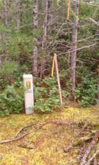0-Lot 1 NE Shoe Lake Rd, Tahuya, WA 98588 (#938148) :: Ben Kinney Real Estate Team
