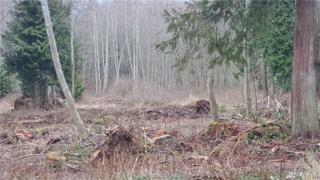 0 Xxx Buck Lake Rd, Hansville, WA 98340 (#1075071) :: Ben Kinney Real Estate Team