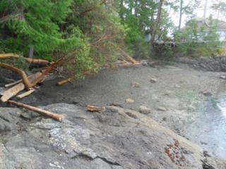 47 Brown Island, Brown Island, WA 98250 (#774844) :: Ben Kinney Real Estate Team