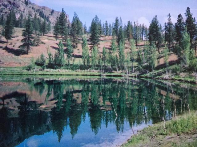 6 Mist Lake Road, Tonasket, WA 98855 (#750295) :: TRI STAR Team | RE/MAX NW