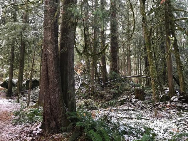 7103 Guy Peak, Glacier, WA 98244 (#1225320) :: Brandon Nelson Partners