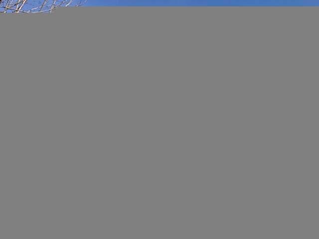 5010 Black Rock Loop SE, Olympia, WA 98501 (#1541394) :: NW Home Experts