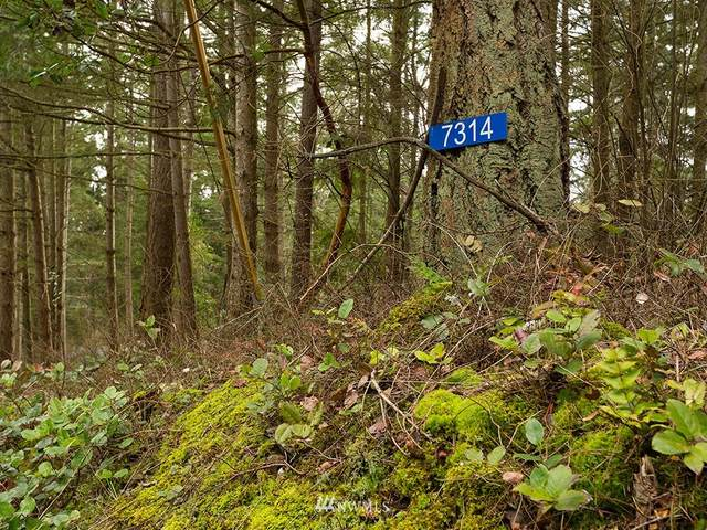 7314 Holiday Blvd, Guemes Island, WA 98221 (#1725681) :: Better Homes and Gardens Real Estate McKenzie Group