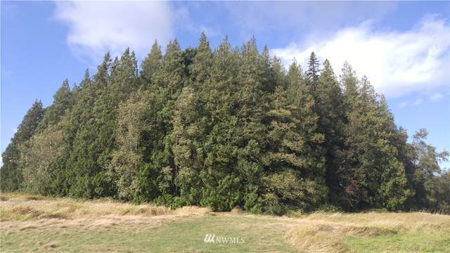 5980 Olson Road, Ferndale, WA 98248 (MLS #1772188) :: Community Real Estate Group