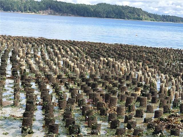 0 4+ Acre Geoduck Tidelands, Shelton, WA 98584 (#1843591) :: The Snow Group