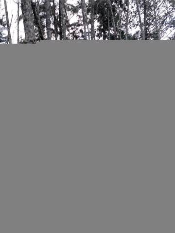 0-Lot 17 Rex St, Point Roberts, WA 98281 (#1555348) :: Crutcher Dennis - My Puget Sound Homes