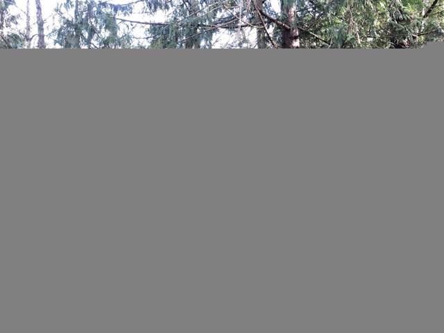 0 Tyee Dr, Point Roberts, WA 98281 (#1555354) :: Crutcher Dennis - My Puget Sound Homes