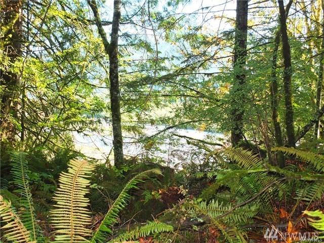 56-xx Mosquito Lake Rd, Deming, WA 98244 (#1182361) :: Ben Kinney Real Estate Team