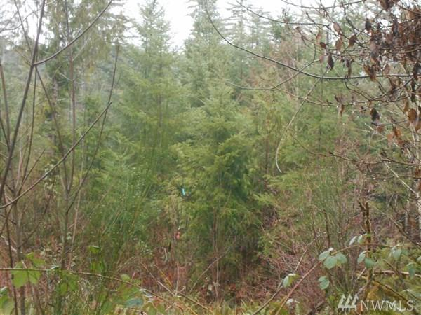 190 Elk Hill Rd, Elma, WA 98560 (#1238937) :: Keller Williams - Shook Home Group