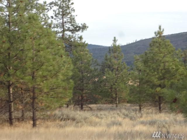 111 Cougar Canyon Rd, Tonasket, WA 98855 (#1387832) :: Keller Williams Realty