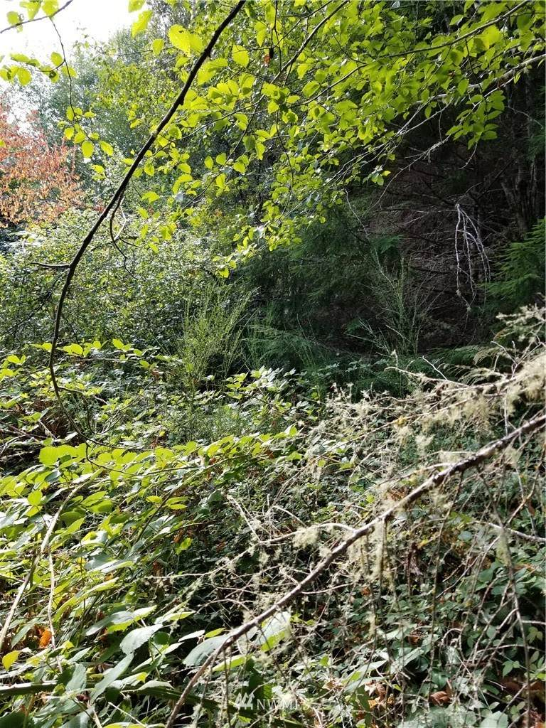 4 Weyers Lane - Photo 1