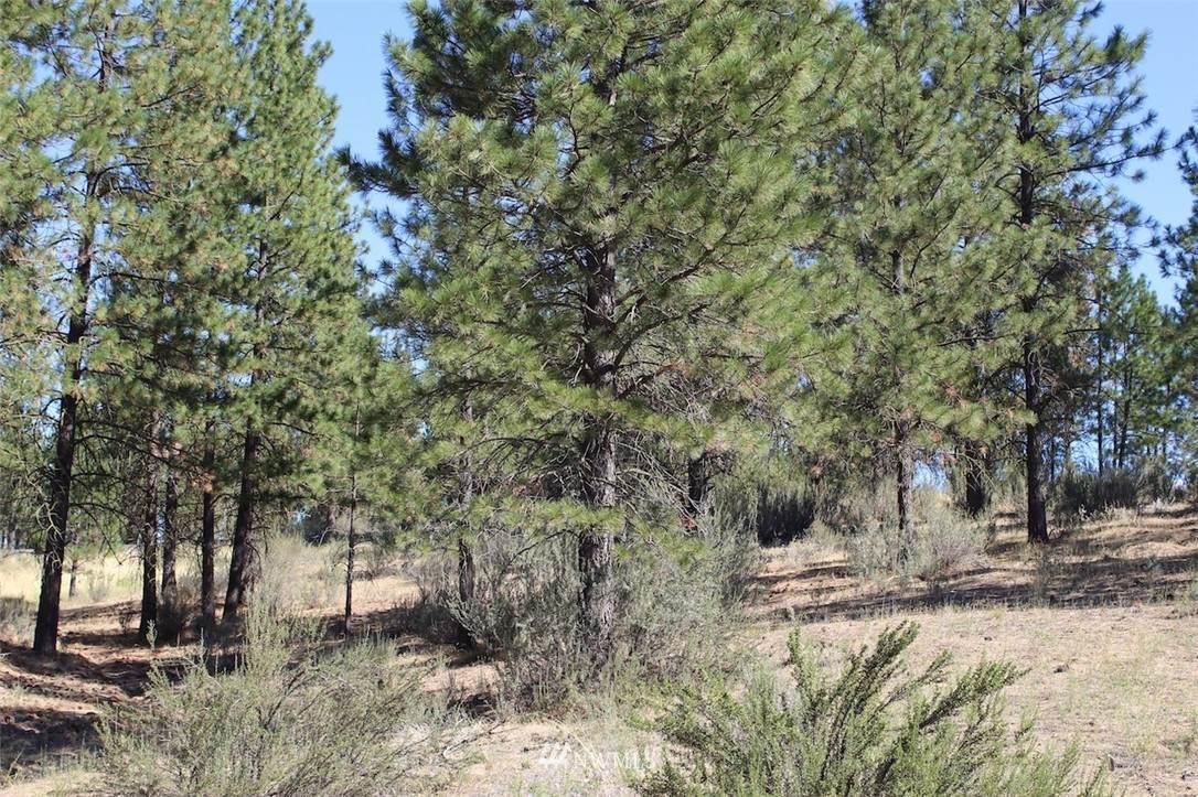 25725 Pine Cone Court - Photo 1