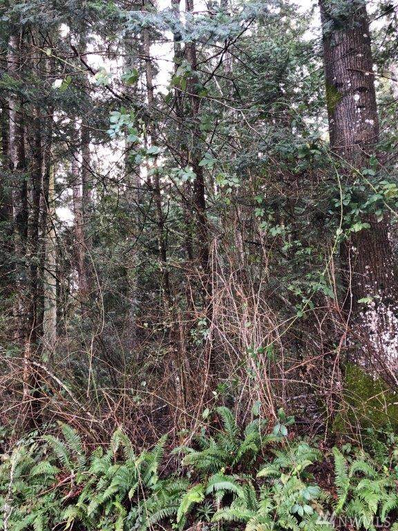 0-Lot 18 Rex St, Point Roberts, WA 98281 (#1555374) :: Real Estate Solutions Group