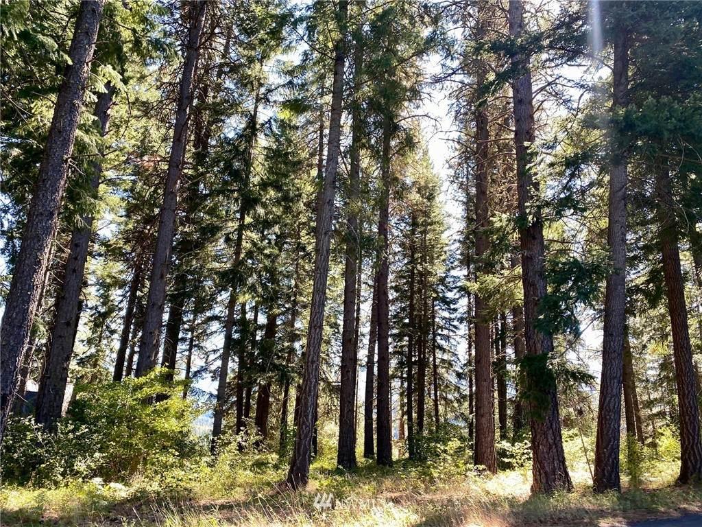 1570 Pinegrass Loop - Photo 1