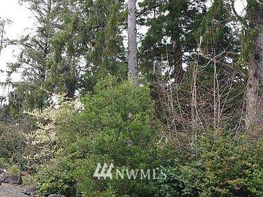 1101 309th Place, Ocean Park, WA 98640 (#1715788) :: Better Properties Real Estate