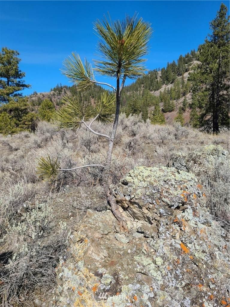 8 xx Whiskey Mountain Ranches - Photo 1
