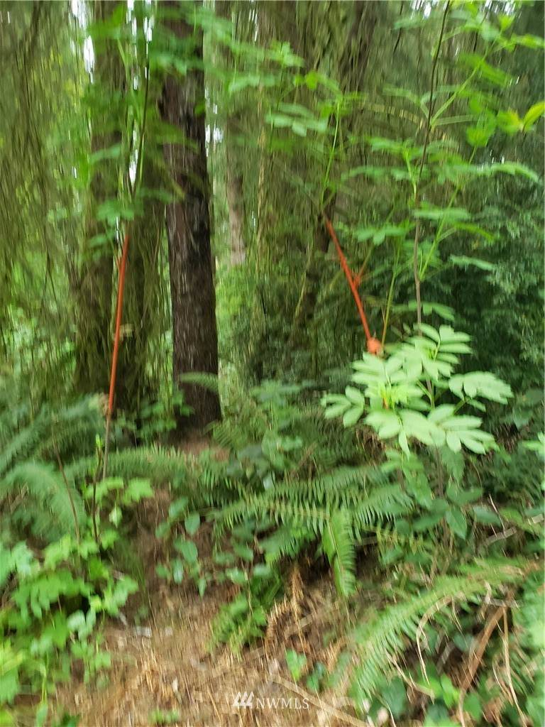23610 Birch Lane - Photo 1