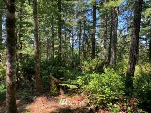 0 Arellem Road, Union, WA 98592 (#1807545) :: Priority One Realty Inc.