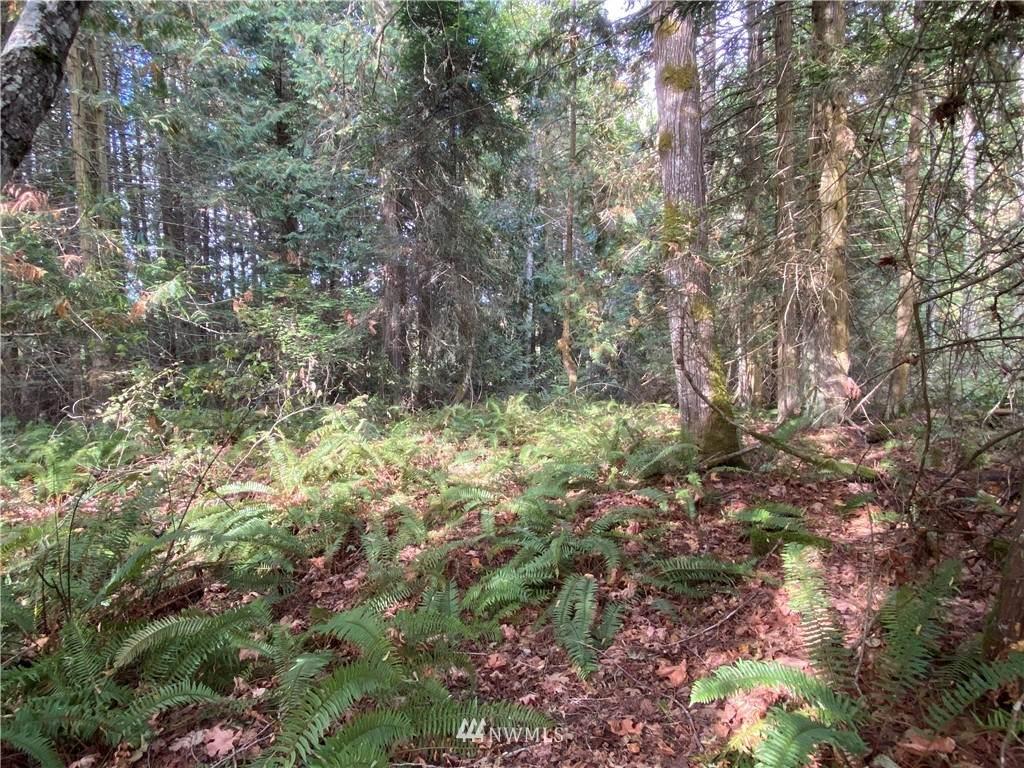 0 Emerald Forest Lane - Photo 1