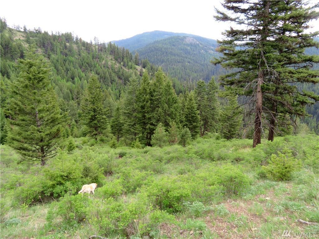 0-TBD Cougar Creek Rd - Photo 1