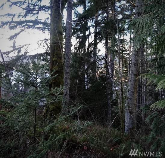 1019 Turkey Rd NW, Olympia, WA 98502 (#1563253) :: NW Home Experts