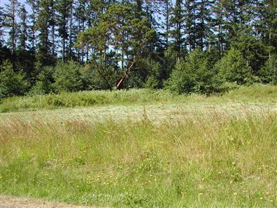 1115 Viewpoint Dr, Oak Harbor, WA 98277 (#621498) :: Brandon Nelson Partners