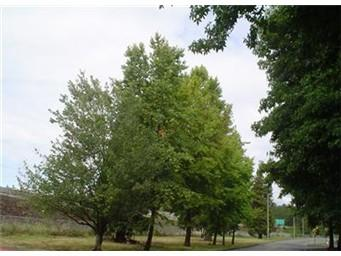 409 Lincoln Ave, Kent, WA 98032 (#791469) :: Ben Kinney Real Estate Team