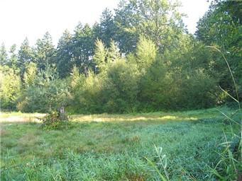 1200 62nd Ave Ne, Tacoma, WA 98422 (#809828) :: Ben Kinney Real Estate Team
