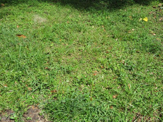 0 SE 61 Ave, Belleview, FL 34420 (MLS #542313) :: Bosshardt Realty