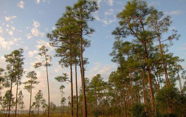 10161-1022 Sw 47th Avenue, Ocala, FL 34476 (MLS #554981) :: Realty Executives Mid Florida