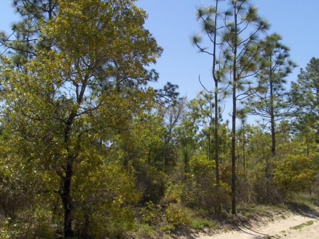 000 NE Hwy Alt 27, Williston, FL 32696 (MLS #528824) :: Bosshardt Realty