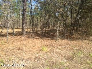 000 SW Commodore Road, Dunnellon, FL 34431 (MLS #533460) :: Realty Executives Mid Florida