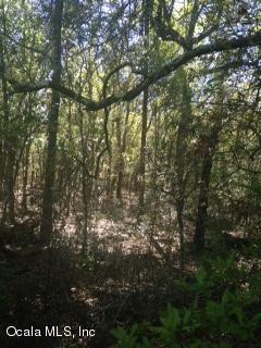 0 Gering Court, Dunnellon, FL 34431 (MLS #533463) :: Realty Executives Mid Florida