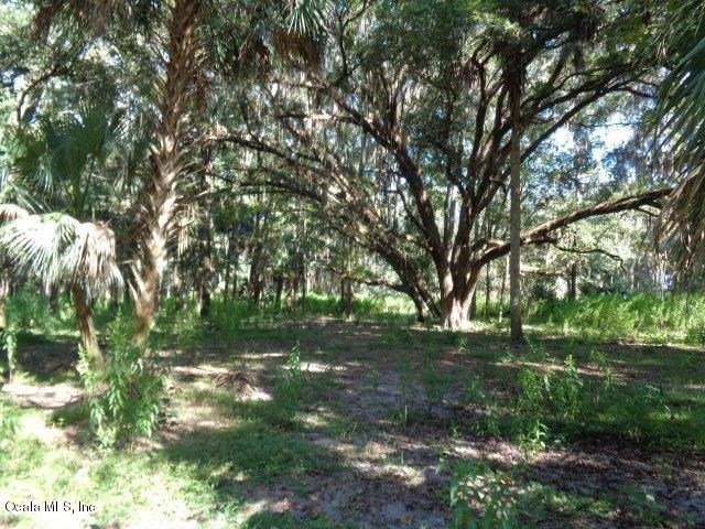 22677 NW 87th Ave Road, Micanopy, FL 32667 (MLS #545388) :: Thomas Group Realty