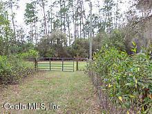 14655 NE 25th Place, Silver Springs, FL 34488 (MLS #552186) :: Bosshardt Realty