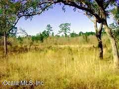 TBD SE 72nd Place, Morriston, FL 32668 (MLS #554790) :: Pepine Realty