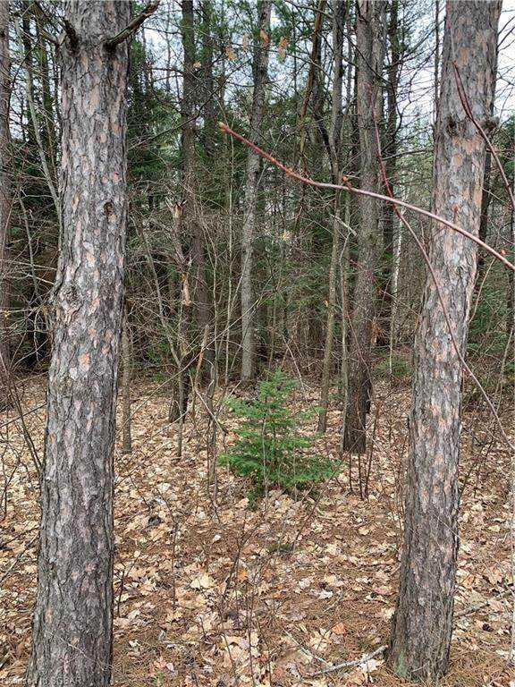 LT 14 518 Highway W, Sprucedale, ON P0A 1Y0 (MLS #257665) :: Forest Hill Real Estate Collingwood