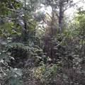 Lot 69 Briar Creek Trail - Photo 11