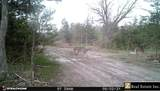 Butler Tract 4 Road E Road - Photo 16