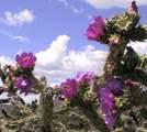 40 Maruche Canyon Rd - Photo 7