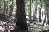 Sugar Pine Dr - Photo 6