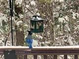 907 Sugar Pine Dr - Photo 10