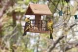 907 Sugar Pine Dr - Photo 11
