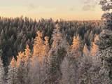 907 Sugar Pine Dr - Photo 17