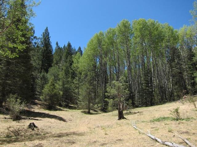 Ely Ln, Cloudcroft, NM 88317 (MLS #151820) :: Assist-2-Sell Buyers and Sellers Preferred Realty