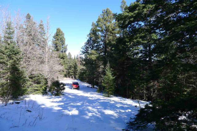 45 Young Spring Rd, Cloudcroft, NM 88317 (MLS #157744) :: Assist-2-Sell Buyers and Sellers Preferred Realty
