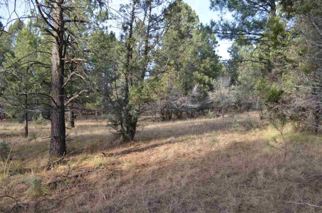 Tract 11 Walker Canyon Rd #2, Mayhill, NM 88339 (MLS #157796) :: Assist-2-Sell Buyers and Sellers Preferred Realty
