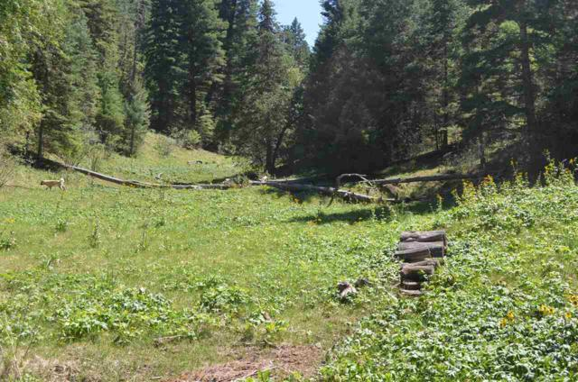 50 Ely Ln, Cloudcroft, NM 88317 (MLS #159101) :: Assist-2-Sell Buyers and Sellers Preferred Realty