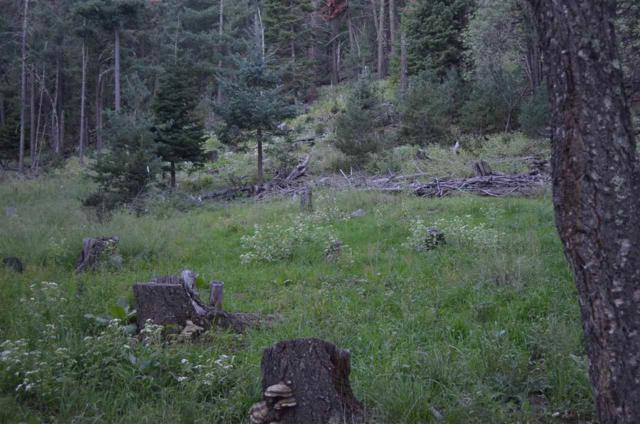 Cowen Road Address Not Published, Cloudcroft, NM 88317 (MLS #159659) :: Assist-2-Sell Buyers and Sellers Preferred Realty